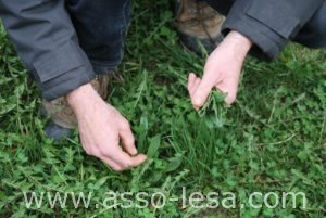 biodiversite-plantes-09_association-lesa